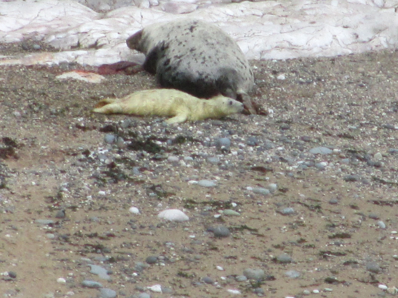Seals On Beach - Outdoor Activities