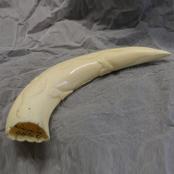 North African Ivory tusk with snake and crocodile carving