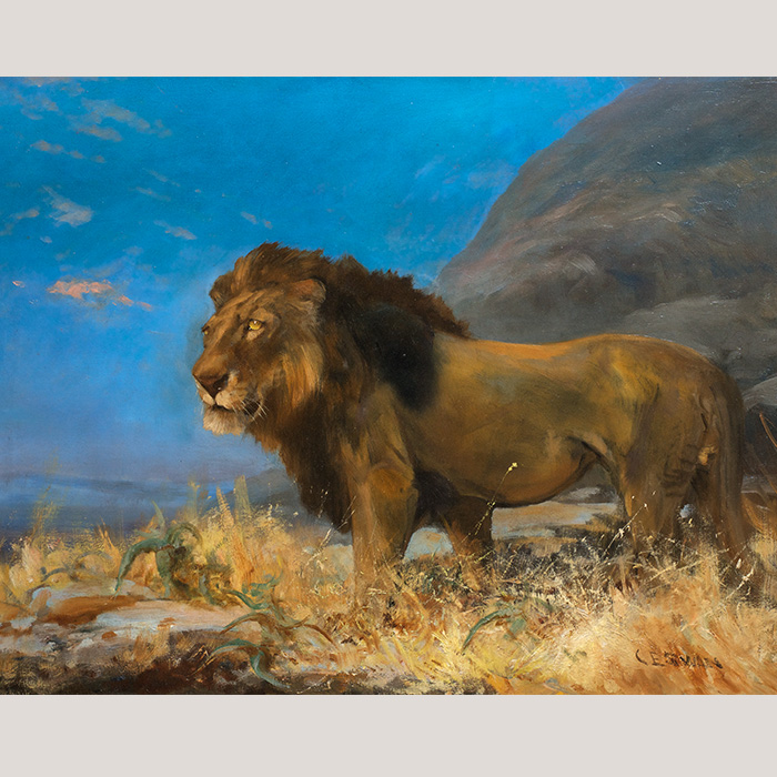 Study of a Lion by Cuthbert Edmund Swan (1870–1931)